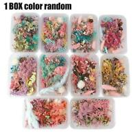 1Box Dried Flowers For Art Craft Epoxy Resin Candle DIY Gift Wedding Decor K6B7