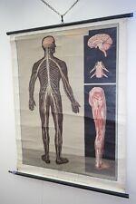 Vecchio Anatomia Lavagna didattica Sistema nervoso Vintage DECORAZIONE