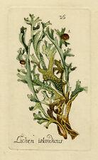 Rare Antique Print-ICELAND MOSS-LICHEN-Happe-1788