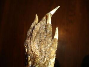 long Middle Finger BACK SCRATCHER Florida swamp Gator Daves paw claw souvenir