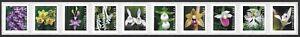USA Sc. 5444a (55c) Wild Orchids 2020 MNH PNC10