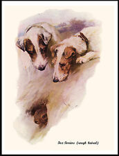 JACK RUSSELL FOX TERRIER DOGS WATCHING RABBIT LOVELY DOG PRINT POSTER
