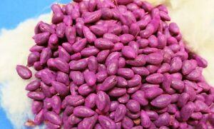 echte Baumwolle, Gossypium sp., cotton seeds, Herkunft China