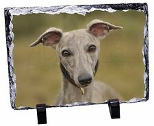 A Gorgeous Whippet Dog Photo Slate Christmas Gift Ornament, AD-WH92SL