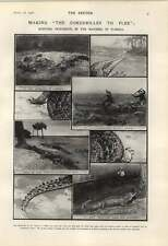1906 Hunting Crocodiles In The Marshes Of Florida Polly Nathan Fish Shop