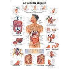 Le système digestif VR2422L