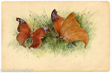 JOLIS PAPILLONS.  NICE BUTTERFLIES. PAPILLON. BUTTERFLY.  INSECT. INSECTES