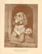 Bloodhound, Skye Terrier, Doghouse, Vintage 1893 German Antique Art Print
