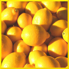 10 mL Fragrance Oil Scent Concentrate ❀ Candle Making Soap Bath Bomb ❀ Lemon