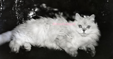 White cat under a Christmas tree. 8 x 10 Vintage Photo Reprint Ships Free.