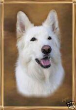German Shepherd Dog - White - Blank Card 10 - Starprint - Auto combined postage