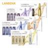 7Pcs/Set LANBENA 7 Days Facial Serum Vitamin C Ampoule Essence Hyaluronic Acid