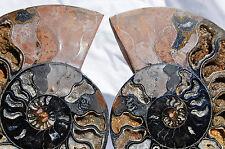 """Rare 1n100 Black Ammonite Cut Pair Deep Crystals Xxlarge 7.2"""" 183mm n1223ee"""