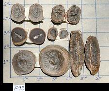 ☆☆ 6 Pack - Mazon Creek Fern Fossil Major Specimen Type Group ☆ Sharp Detail ☆