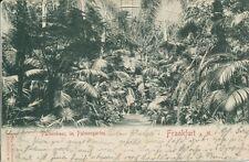 Frankfurt a.M. Palmenhaus Innenansicht gl1900 131.969