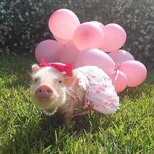 Priscilla The Mini Pig  - Edible Cake Sugar Frosting Sheet Topper