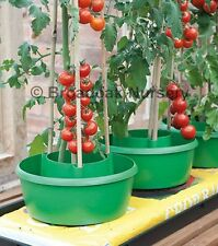 3 x PLANT HALOS Green - Watering & Support Solution - Grow Bags, Raised Beds...
