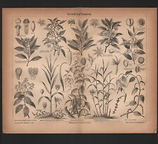 Lithografie 1876: Gewürz-Pflanzen. Gewürze Pfeffer Sternanis Ingwer Vanille
