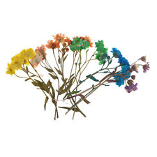 20pcs Pressed Real Dried Flowers for DIY Cards Floral Arts Crafts