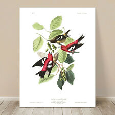 "FAMOUS SEA BIRD ART ~ CANVAS PRINT  18x12"" ~ JOHN AUDUBON ~ Crossbill Finch"