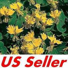 15 Seeds Nasturtium Seeds T59, Canary Creeper Seeds Home Gardening Seeds