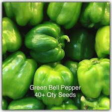 Big Green Bell Pepper Organic 40+ Qty Seeds from California Free Ship