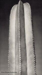 1935 Vintage BRETT WESTON Abstract Cactus Botanical Original Photo Engraving Art