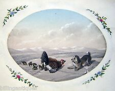 ANIMALS GAME DEFENDING CHICKS BURNISHED PAPER OVAL PENCIL W/ COL ENG SCH C1830