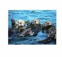 AK Ansichtskarte Nordpazifische Seeotter