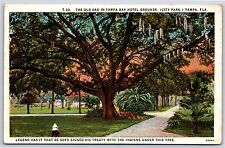 The Old Oak Tree in Tampa Bay Hotel Grounds City Park Tampa, Florida Postcard
