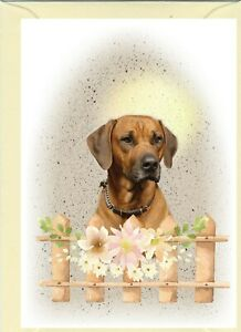 "Rhodesian Ridgeback Dog (4""x 6"") Blank Card ideal Mothers Day, Birthday, etc."