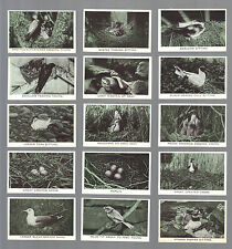 Cigarette Cards.Challis Tobacco.Wild Birds At Home.(1935).(Complete Set of 36).