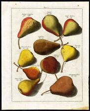 Antique Print-PEARS-Pomologia-Knoop-1758