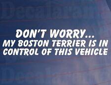 No Worry Año de Modelo Boston Terrier IS en el control esto coche vehículo /