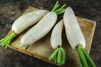 Radish China White Non GMO Winter Heirloom Root Vegetable Seeds Sow No GMO® USA