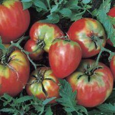 Erbstück OP Oxheart Tomate 100 Samen Coeur de Boeuf, große kräftige, wenige Samen