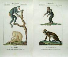 2 Original Antique Monkey Prints: Baron Georges Cuvier: Florence, 1837