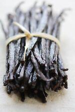 100 grams (Gourmet Grade) Mexican Vanilla Beans (28-40 beans)- Voladores Vanilla