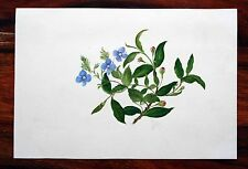 SUPERB ANTIQUE 1829 ORIGINAL WATERCOLOUR HAND PAINTING FLOWERS BUDS LEAVES