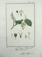 1801 R. Turpin - ELM Manuscript LARGE PAPER EDITION original hand colour