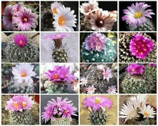 Turbinicarpus MIX exotic niniature mexican cacti rare cactus seed aloe 50 SEEDS