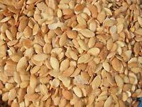 100% Morrocan argan Tree Viable seeds Rare Argan Seeds 100 pcs