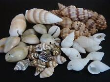 50 pce Mix Variety Drilled Sea Shell Beads Various Sizes & Shapes Beach Craft