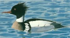 Mounted Print. Male Redbreasted Merganser  Charles Tunnicliffe