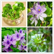 Water Hyacinth Flores Seeds Plants Flower Pond Flowers Pots Garden 100pcs/bag