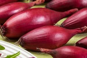 Onion Seeds Penguin Heirloom Vegetable Seed from Ukraine
