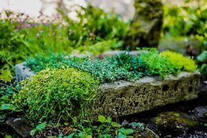 Large Aged Effect Herb Planter Trough Heavy Stone Cast  by DGS Statues 40KGS