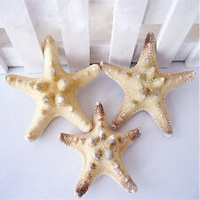 2X Natural Starfish Sea Star Miniature Aquarium Ornaments Random DIY Craft Decor