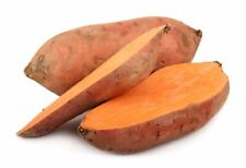 Sweet Potato Jicama Yam 100 PCS Vegetable  Plants Home Garden Planting Seeds