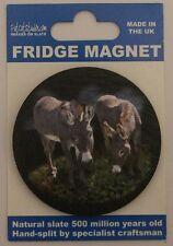 Horse Equestrian Donkey Fridge Magnet  Welsh Slate
